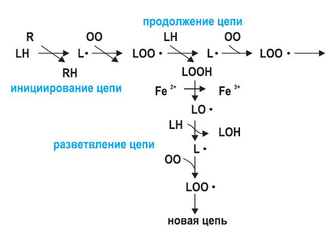 reakcia-lipidov
